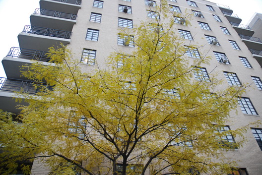 Yellow Tree-Bldg