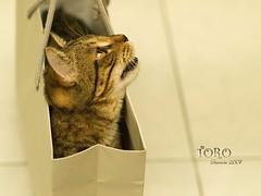 Little present (Sherwin_andante) Tags: home cat 50mm takumar toro 貓 2007 e510 10faves 200711 龍二