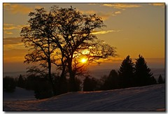 December Sunset (3) (Roger Lynn) Tags: winter sunset snow tree moscow idaho golfcourse universityofidaho palouse naturesfinest aplusphoto