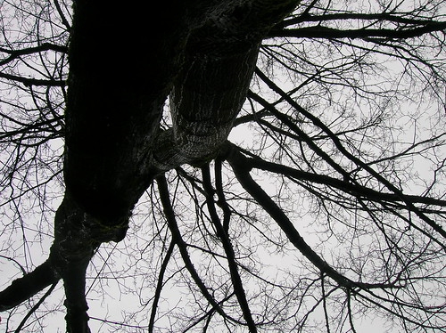 vertigo tree