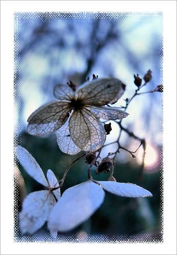 Winter Floret