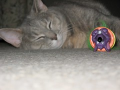 Grace napping, again (Manny45) Tags: girls cats animals grace felines my theloveshack