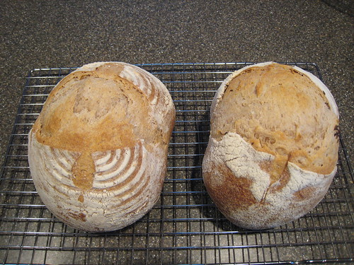 Sourdough - Half white/half whole wheat
