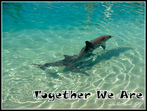 Sea World : Together We are