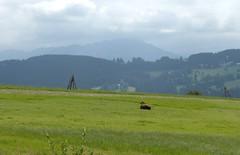 Podtatrze, Poland - view for Tatra NP (LeszekZadlo) Tags: mountains green nature landscape nationalpark europe reserve poland polska biosphere hills polen np polonia tatry pn tatras ue reserva mab pologne maopolska biosfera 5photosaday podhale podtatrze