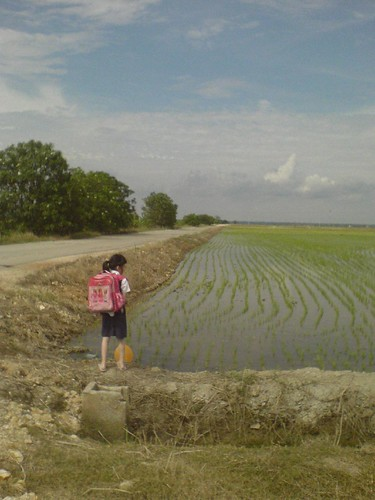 Watching the paddy field
