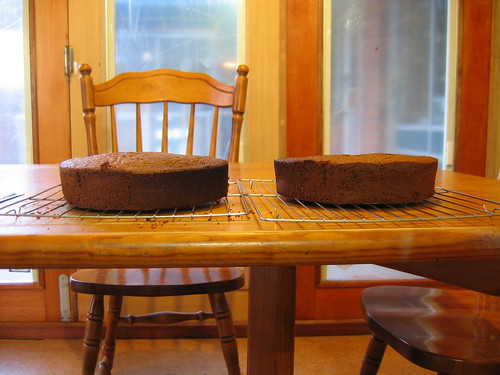Chocolate genoise cake cooling
