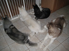 The Dogs
