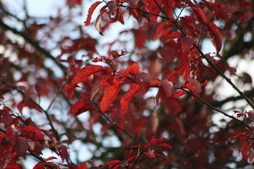Red Tree ?