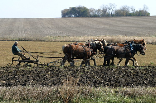 Plowing by horse team