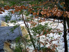 Autumn Storm flow (Dick and Wendy) Tags: autumn storm water stream rapids beech roogagh