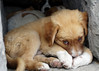 Puppy, Miletus, Turkey (michellemorley) Tags: cute fauna turkey puppy adorable cutepuppy puppyeyes adorablepuppy miletus ultimateshot theperfectphotographer goldstaraward flickrlovers