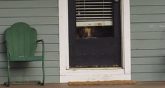 Who is it? (V.L.Black) Tags: door dog green chair boulder neighborhood snaps porch blinds ocfd