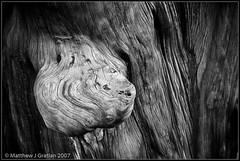 WoodGrain - B&W (mgrat) Tags: china wood blackandwhite bw plant abstract tree nature beijing age bark oldtree soe woodgrain lightroom betterthangood
