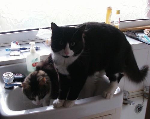 Cedric and Albert