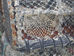 crab pot close-up