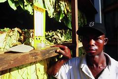 Africaleaf Ltd - Lilongwe, MALAWI (Yesmoke) Tags: africa italy torino italia cigarette smoke smoking malawi cigarettes turin tobacco tabacco sigarette sigaretta tobaccofactory lilongwe tobaccos settimotorinese tobaccoplantation yesmoke yesmokefactory yessmoke fabbricadisigarette cigarettesfactory luigitoscano africaleafltd yesmokemalawi