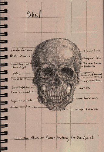 skull_frontal view