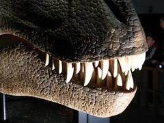 Dinosauri: scoprire come erano fatti grazie al 3D