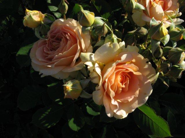 garden4-08 005