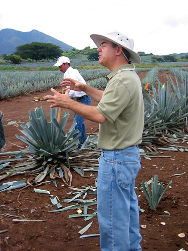 The agave fields of Jose Cuervo distillery