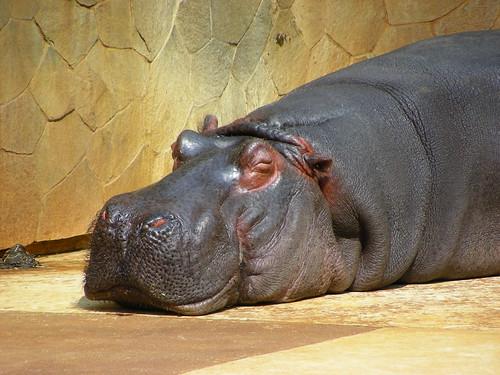 飯窪「動物園ではカバが好き」 [無断転載禁止]©2ch.netYouTube動画>1本 ->画像>359枚