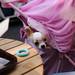 チワワ:Chihuahua_17