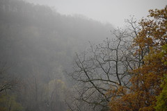 misty escarpment (weelibrarian) Tags: fog escarpment