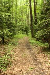 Scott Run Trail in Cooper's Rock State Forest