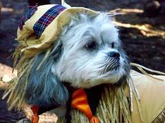 tHAT's Precious () Tags: nyc dog halloween les costume lowereastside dressup thebiggestgroup 10millionphotos kodakz712is tompkinssquarehalloweendogparade