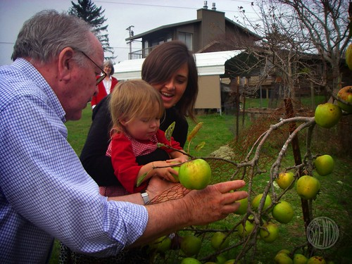 picking Grandpa's organic apples