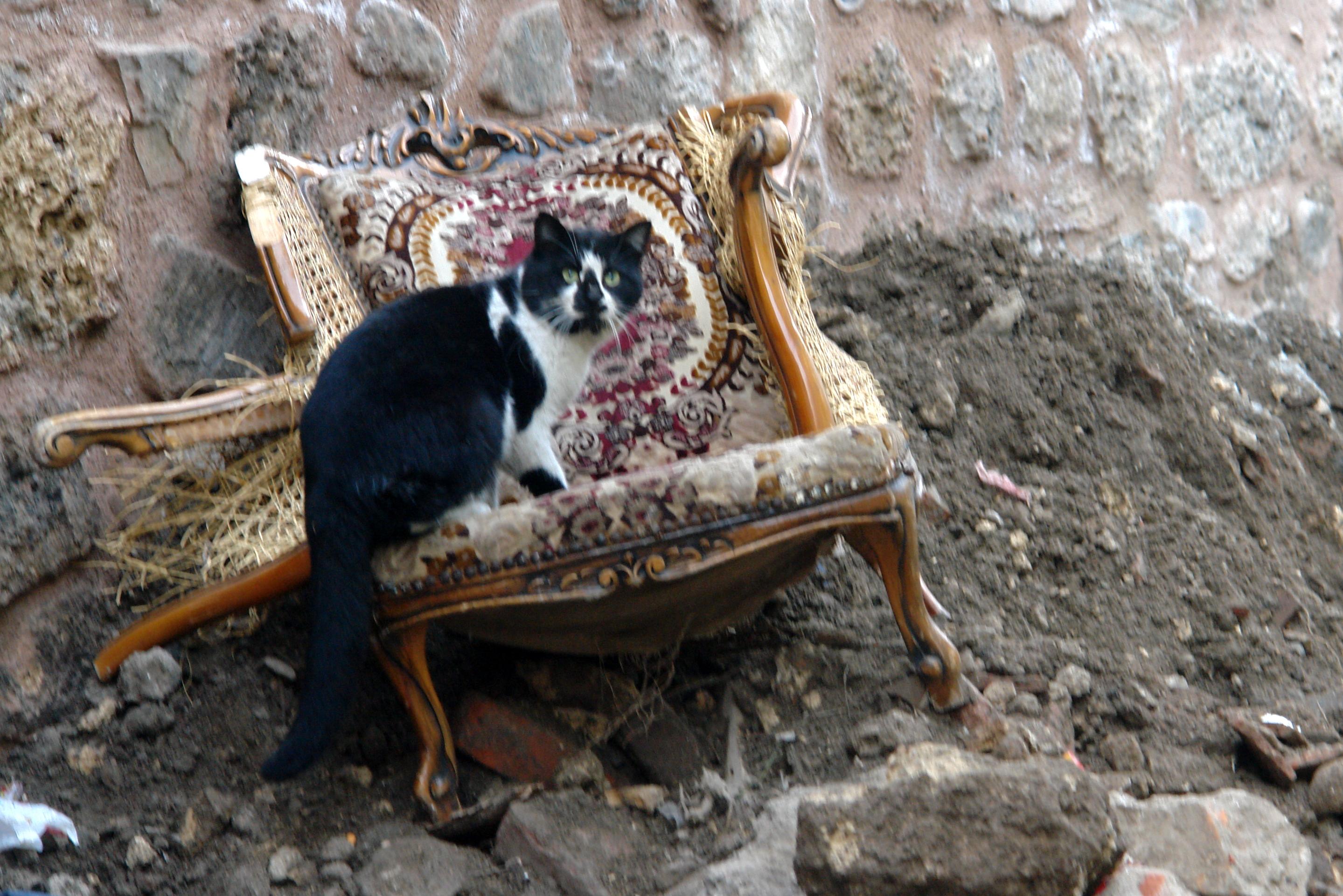sokak köpeği veya kedi fotosu olan var mı?