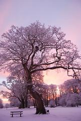 Winter tree (Ryan McD) Tags: park ireland red sky sun snow tree sunrise nikon northernireland sunrays ulster castlewellan codown mywinners d40x