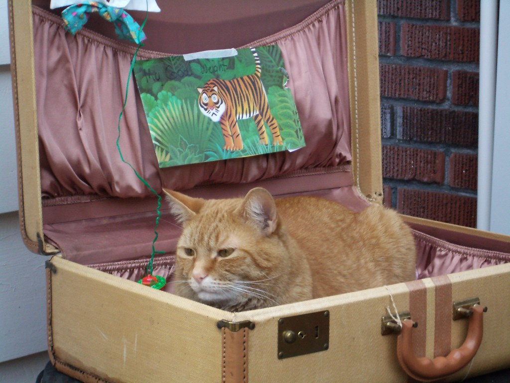Cat Bed In A Suitcase