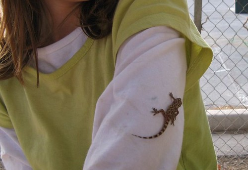 Lizard on her arm