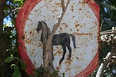 no horses (ellybrown) Tags: sign warning beware wollo amhara kombolcha