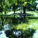 Jardim da Estrela_1