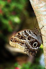 (Vinícius Santa Rosa) Tags: brasil butterfly borboleta brunch tronco brasilia rastro rastrostyle