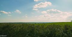 Presque une journée de printemps. (Crilion43) Tags: arbres france véreaux divers réflex ciel champ nature paysage objectif centre nuages canon herbe tamron 1200d cher maison pré sapin thuya