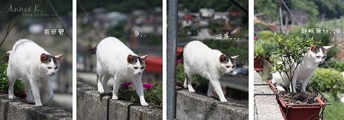平溪線貓7