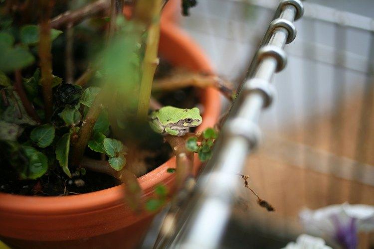 06-09-garden7