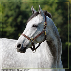 Ian (Rock and Racehorses) Tags: fab portrait ian grey nj jumper envy soe thoroughbred horseparkofnewjersey shieldofexcellence envyofflickr shoreclassic