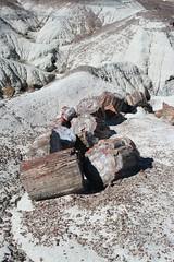 Petrified Wood (iheartpandas) Tags: arizona forest holbrook petrified