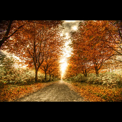 My Way (Dimitri Depaepe) Tags: road autumn trees leaves way bravo searchthebest belgium belgie infrared hdr superfriends themoulinrouge hansbeke superaplus aplusphoto thegoldenmermaid superdimi thegoldendreams