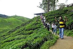 All of us (irwandy) Tags: cameron malaysia nd cameronhighlands teaplantation boh perak bohtea irwandy sungaipalas sungeipalas sgpalas ladangteh