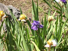 ortobotanico 169 (blum1) Tags: alberi fiori piante ortobotanico
