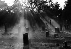 Cemetery Light B&W (ElWanderer) Tags: uk morning light england blackandwhite bw sun sunlight mist monochrome cemetery grave silhouette blackwhite woking haze ray surrey graves explore gravestone sunburst desaturated churchyard rays shafts gravestones shaft horsell churchofstmarythevirgin sigma30mmf14 sigma30mmf14exdchsm interestingness80 explored i500 inexplore wowiekazowie explore20071124