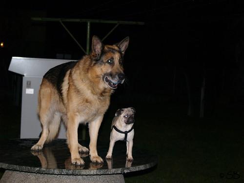 Odin und Mino