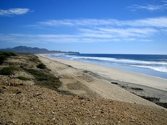 Baja DecJan 20072008 063 (itineranttwo007) Tags: baja floraandfauna thetripwithtigger