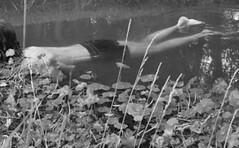 agua humana (Analía Acerbo Arte) Tags: agua humano inversión transparecia
